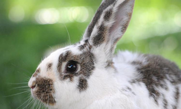 Got A Rabbit Problem On Your Property?