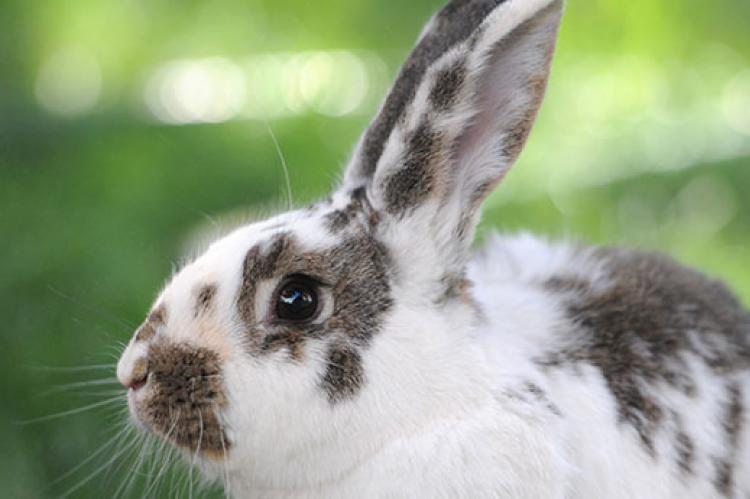 Got A Rabbit Problem On Your Property?