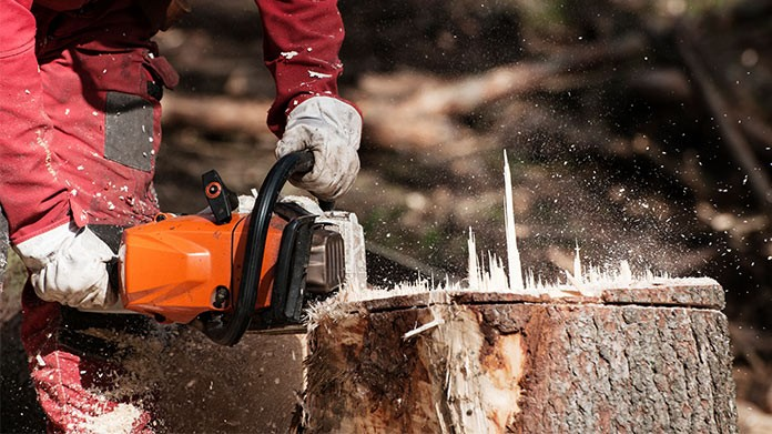 Does your home require stump removal services?